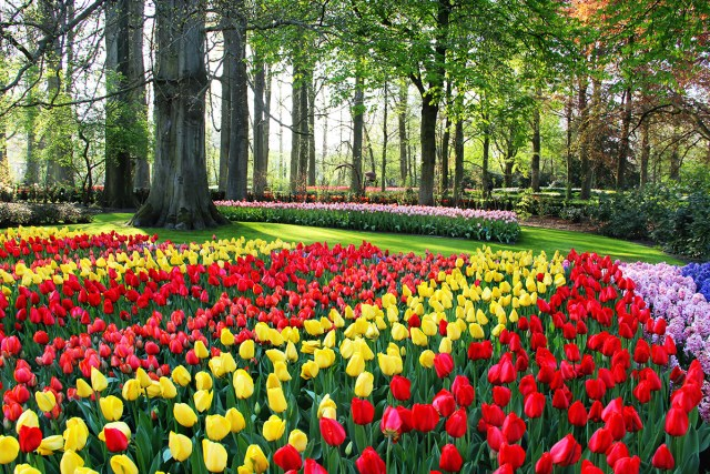 imagenes del jardin de flores de Keukenhof
