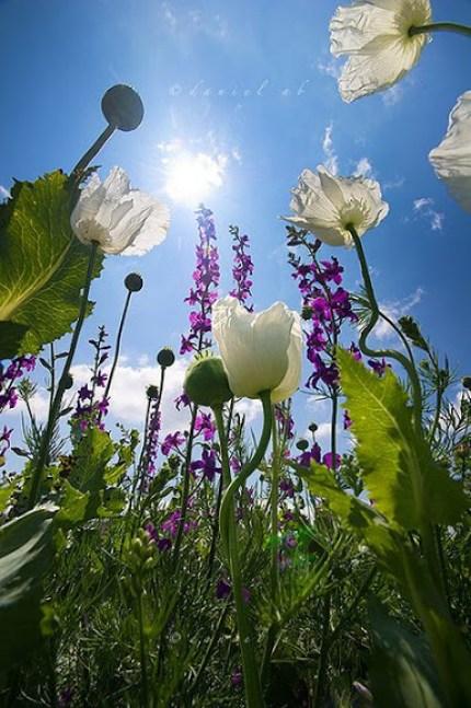 Fotos de jardines para whatsapp