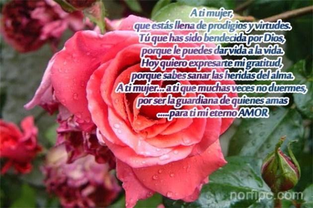 Imagen con una rosa y con poemas de amor