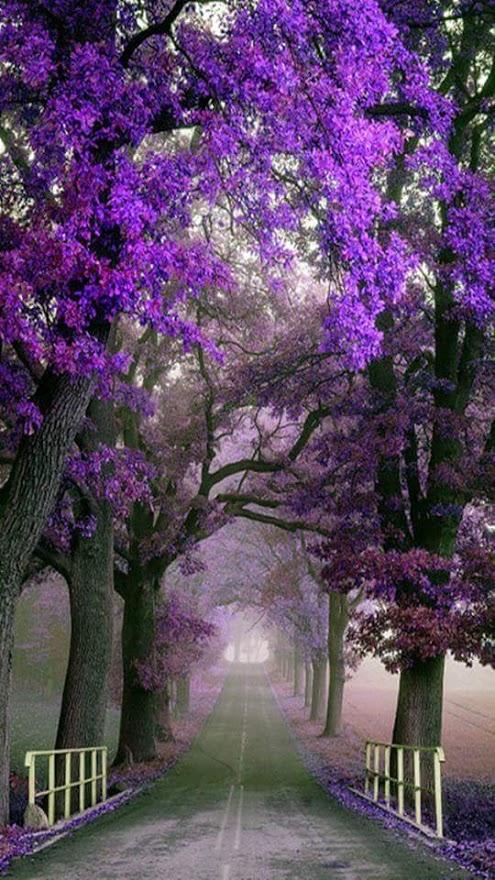 Imagenes de jardines con flores para pantalla de celular for Imagenes de fondo de pantalla bonitos