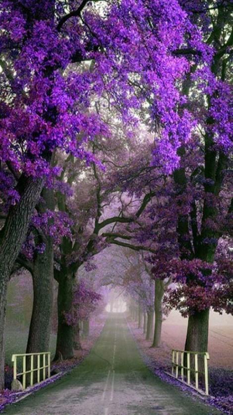 Imagenes de Jardines bonitos para usar como fondo de pantalla del cel