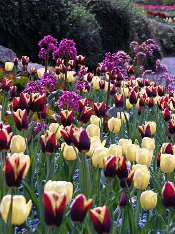 Imagenes de jardines para enviar por mensajes