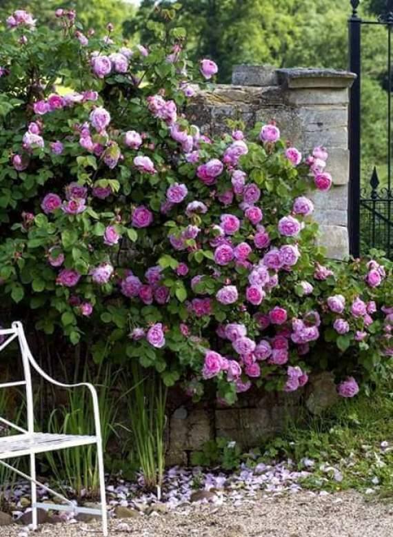 Jardines de rosas para fondo de celular