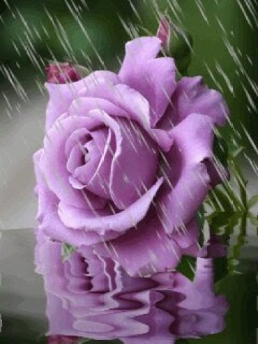 imagenes de flores para enviar por celular
