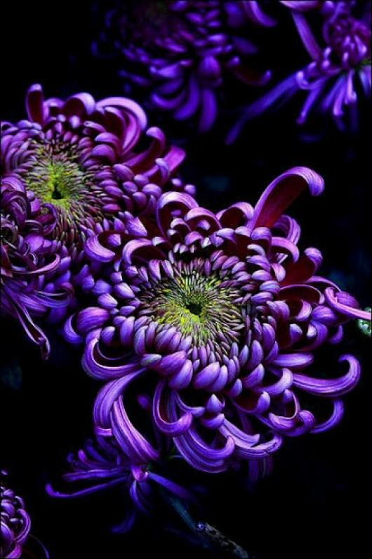 preciosas flores para enviar por whatsapp