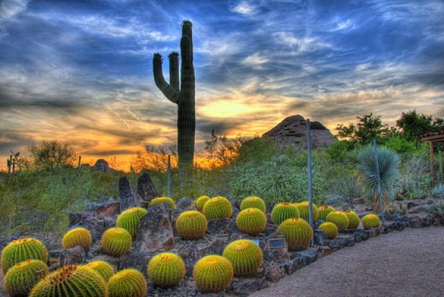 Descargar imagenes del jardin botanico del desierto en Arizona