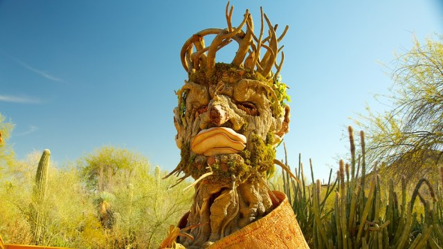 Fotos del jardin botanico del desierto en Arizona