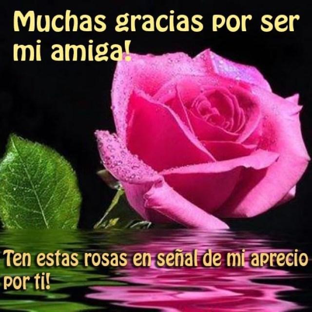 Imagen de rosa rosada gracias por tu amistad