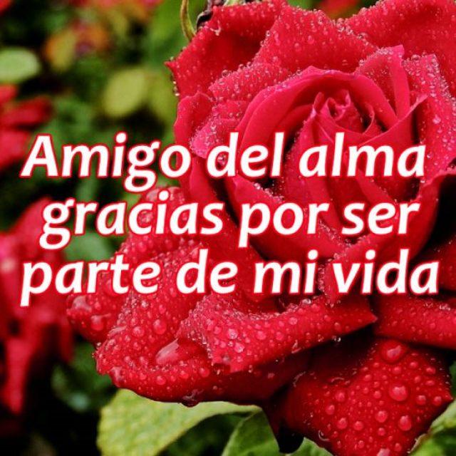 Imagenes de rosas con frases para un amigo