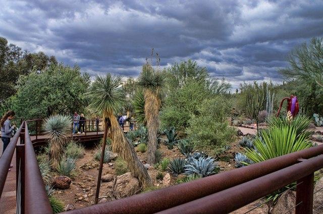 Imagenes para compartir del jardin botanico del desierto