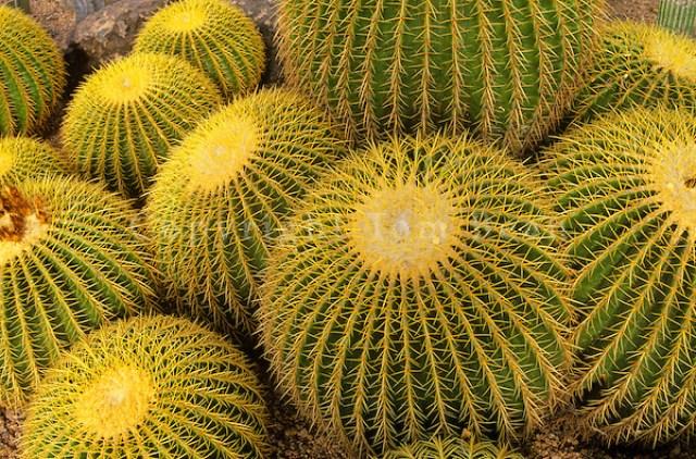 Jardín Botanico del Desierto En Phoenix plantas del desierto