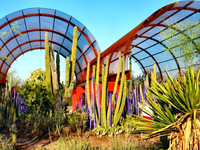Jardin botanico del desierto en Phoenix imagenes para descargar