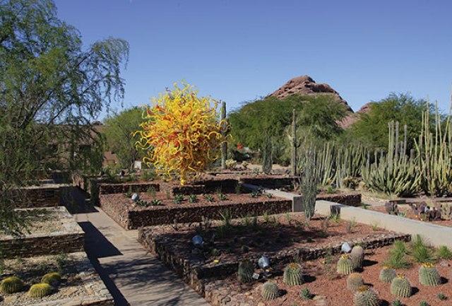 Paisajes del jardin botanico del desierto en Arizona