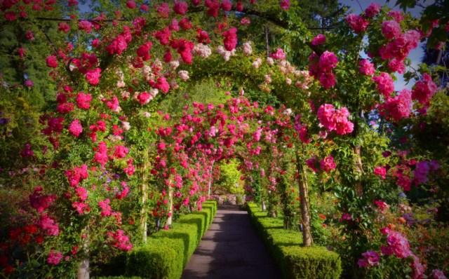 Preciosas imagenes del jardin Butchart para compartir