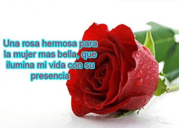 Rosas con versos de amor para mi novia