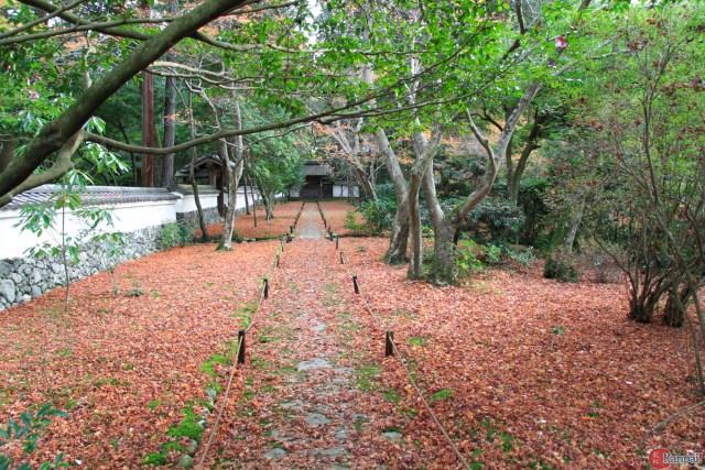 fondos-de-pantalla-del-famoso-jardin-de-musgo-saiho-ji