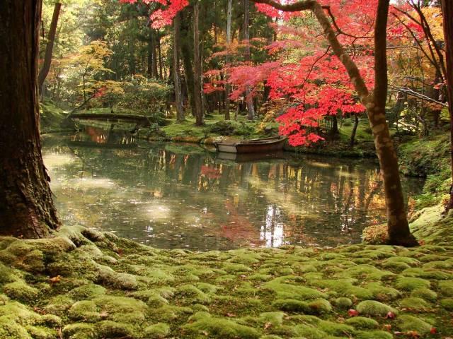 fotos-del-famoso-jardin-de-musgo-saiho-ji