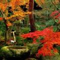 Imagenes Del Famoso Jardín De Musgo Saiho-ji