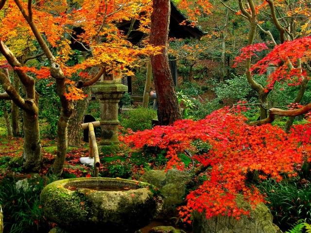 imagenes-del-famoso-jardin-zen-saiho-ji
