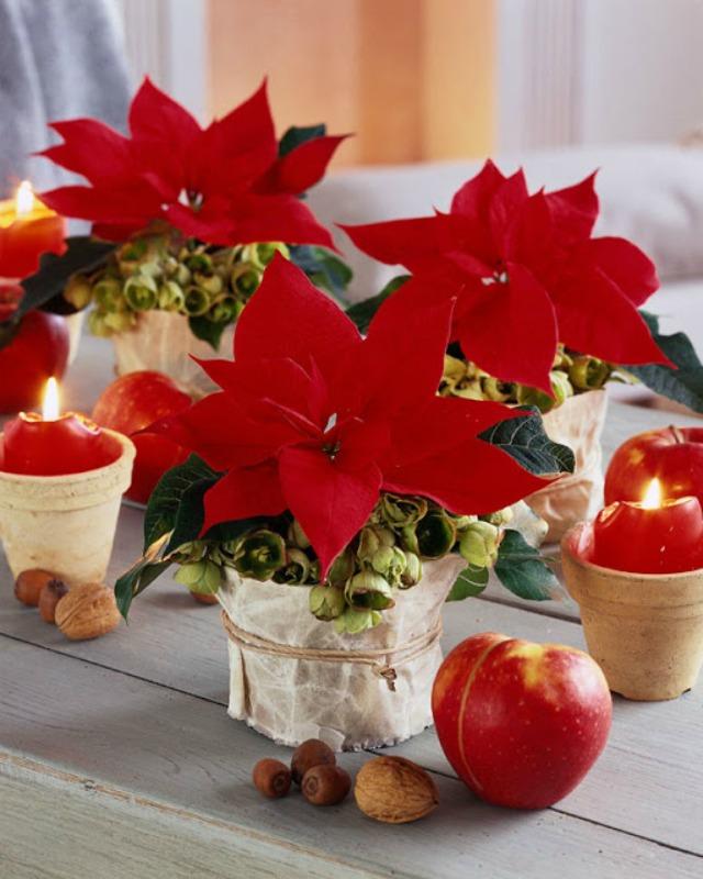 decoracion-navidenas-con-flor-de-pascua