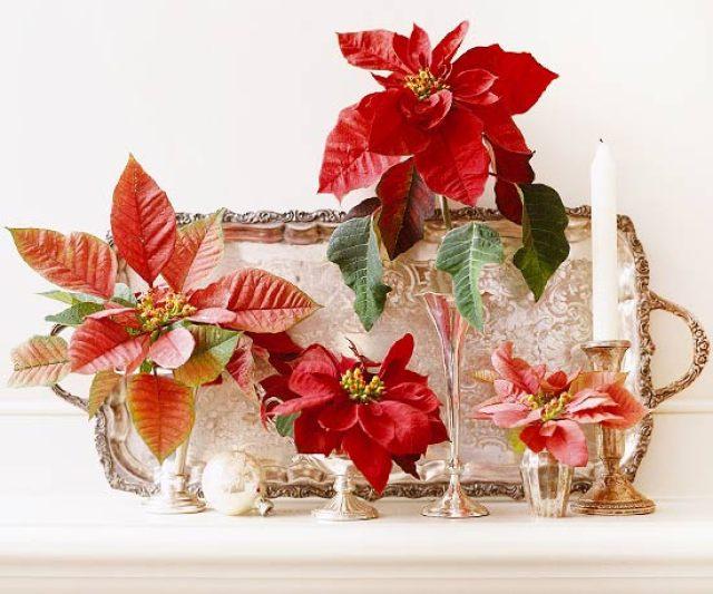 decoraciones-de-navidad-con-ponsetias