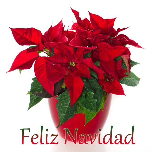 Imagen con flores navideñas con mensaje feliz navidad