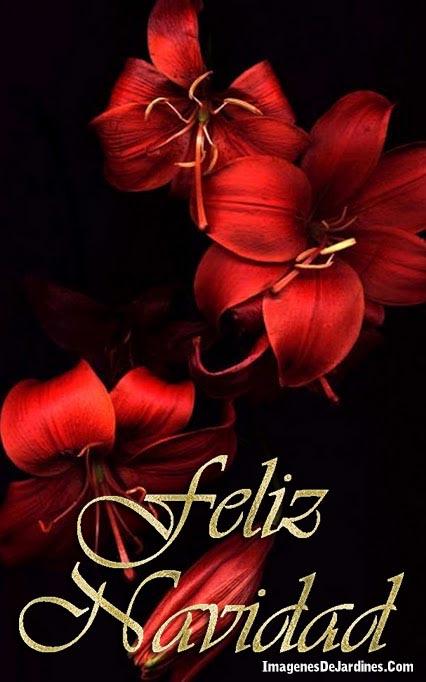Imagenes de flores rojas feliz navidad - Imagenes flores de navidad ...