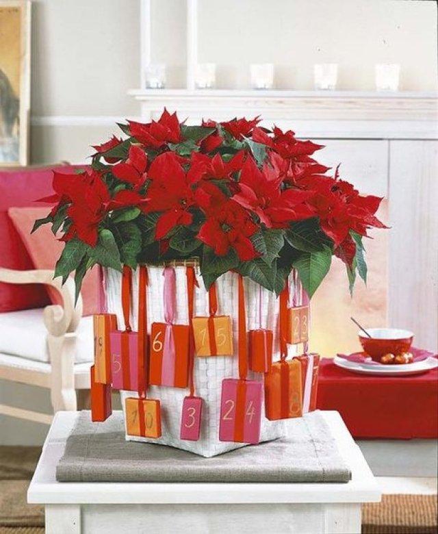 Ideas originales para decorar en navidad con flores de pascua