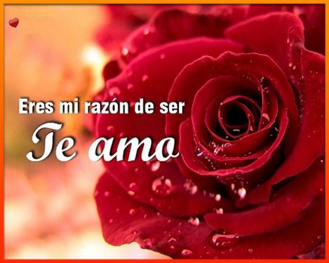 imagenes-de-rosas-con-frases-de-amor-para-mi-novia