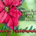 Mensajes Cortos De Navidad En Imagenes Con Flores De Pascua