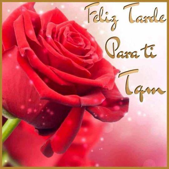Imagenes de rosas rojas feliz tarde para ti