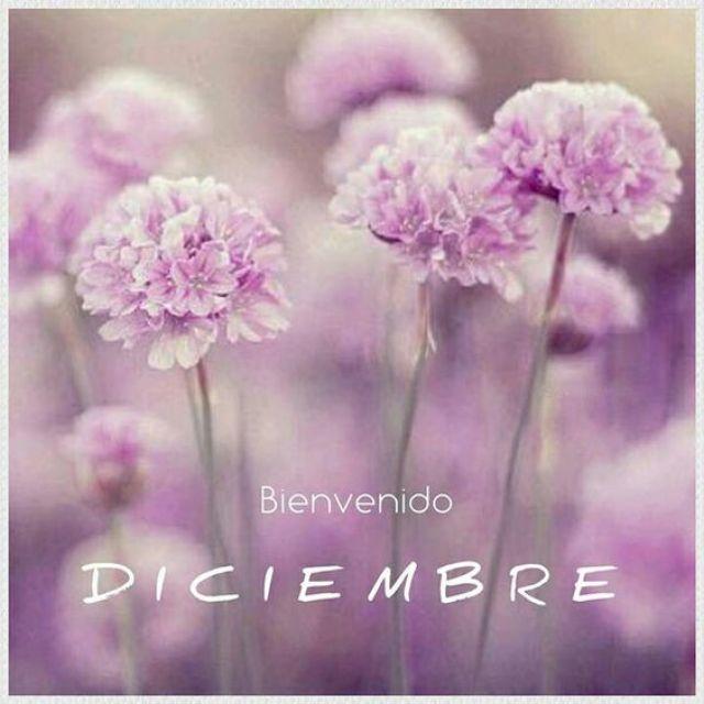 Bienvenido Diciembre Imagen con flores lilas para estado