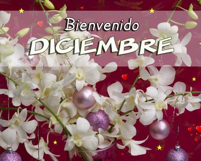 Bienvenido Diciembre Navidad-Flores