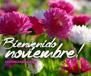 Bienvenido Noviembre Imagenes de Flores