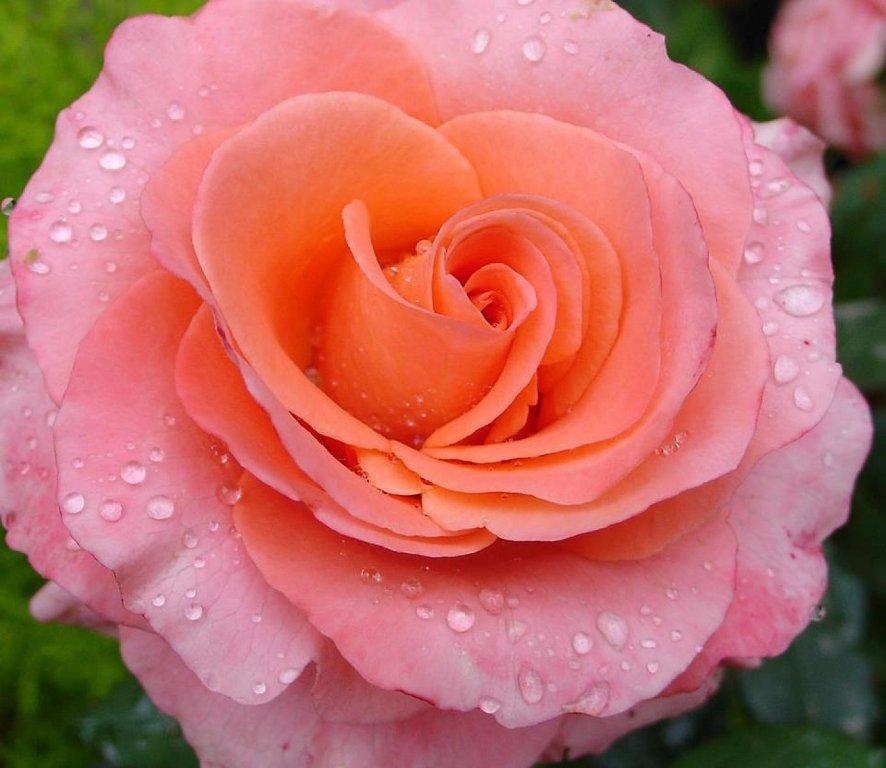 30 imgenes bonitas de Flores Hermosas para apreciar y
