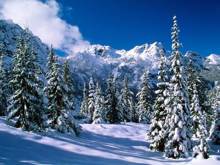Postales con paisajes de invierno para usar de Protector de Pantalla