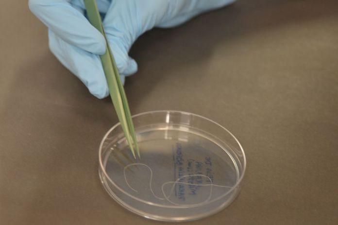 A fabricação de teias de aranha em laboratório é realidade para pesquisadores brasileiros, que, no futuro, podem também fazê-las crescer em plantas (Wilson Dias/Agência Brasil)