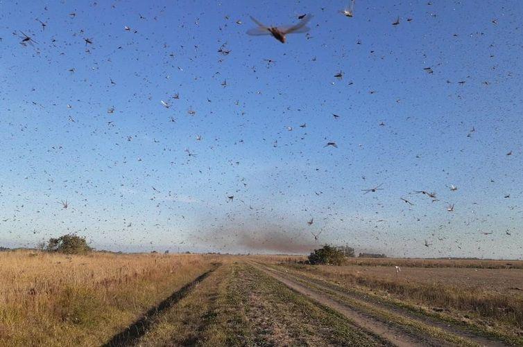 Nuvem de gafanhotos vista da cidade argentina Córdoba: insetos voam em direção à fronteira brasileira (Governo de Córdoba/Divulgação)