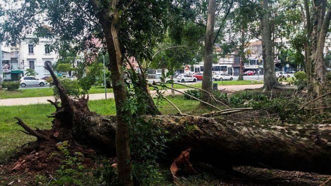 Porto Alegre - Após cinco dias de trabalho para recuperação dos estragos causados pelo temporal da última sexta-feira (29), alguns parques da cidade continuam devastados (Daniel Isaia/Agência Brasil)