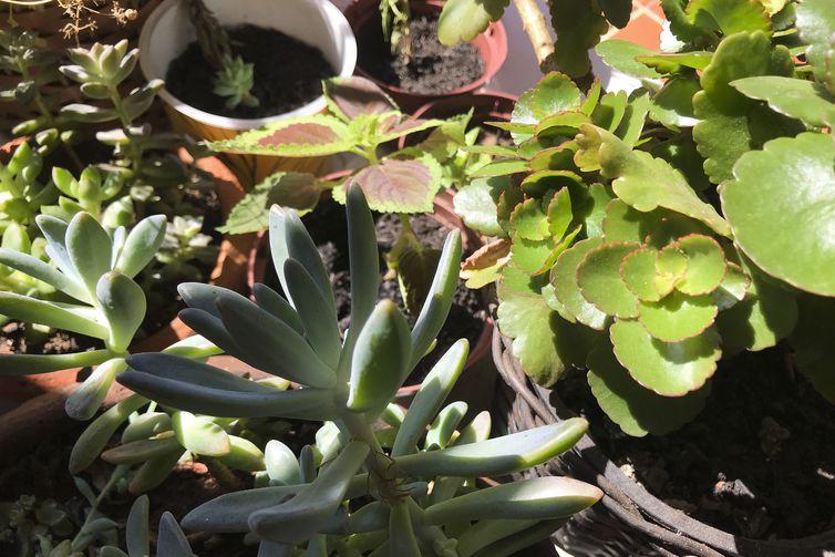 Cultivo de plantas em casa