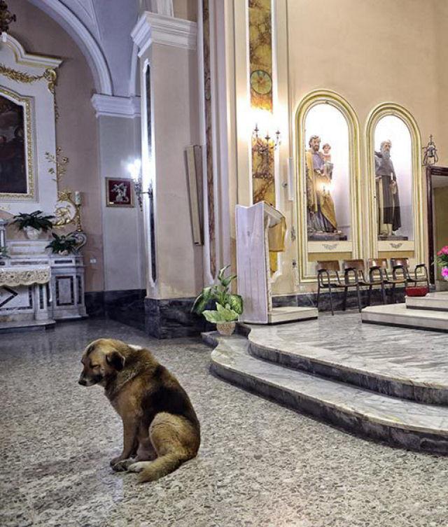 Cão vai à missa todos os dias esperando encontrar sua dona que morreu