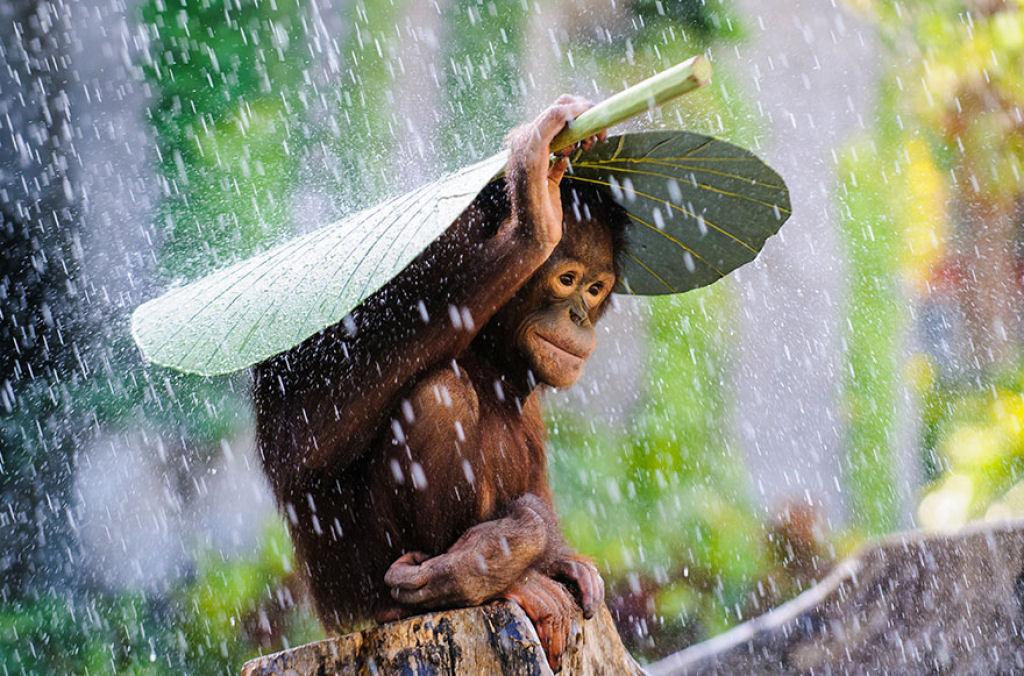 Resultado de imagem para animais embaixo de flores com chuva