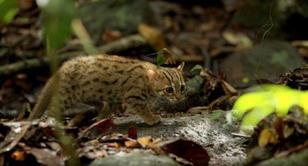 O menor gato do mundo é ridiculamente fofo e temos fotos para provar 05