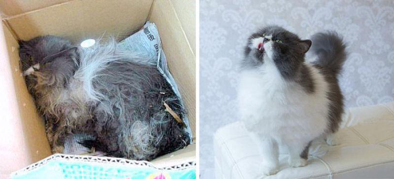30 fotos que contam a histria de gatos resgatados da
