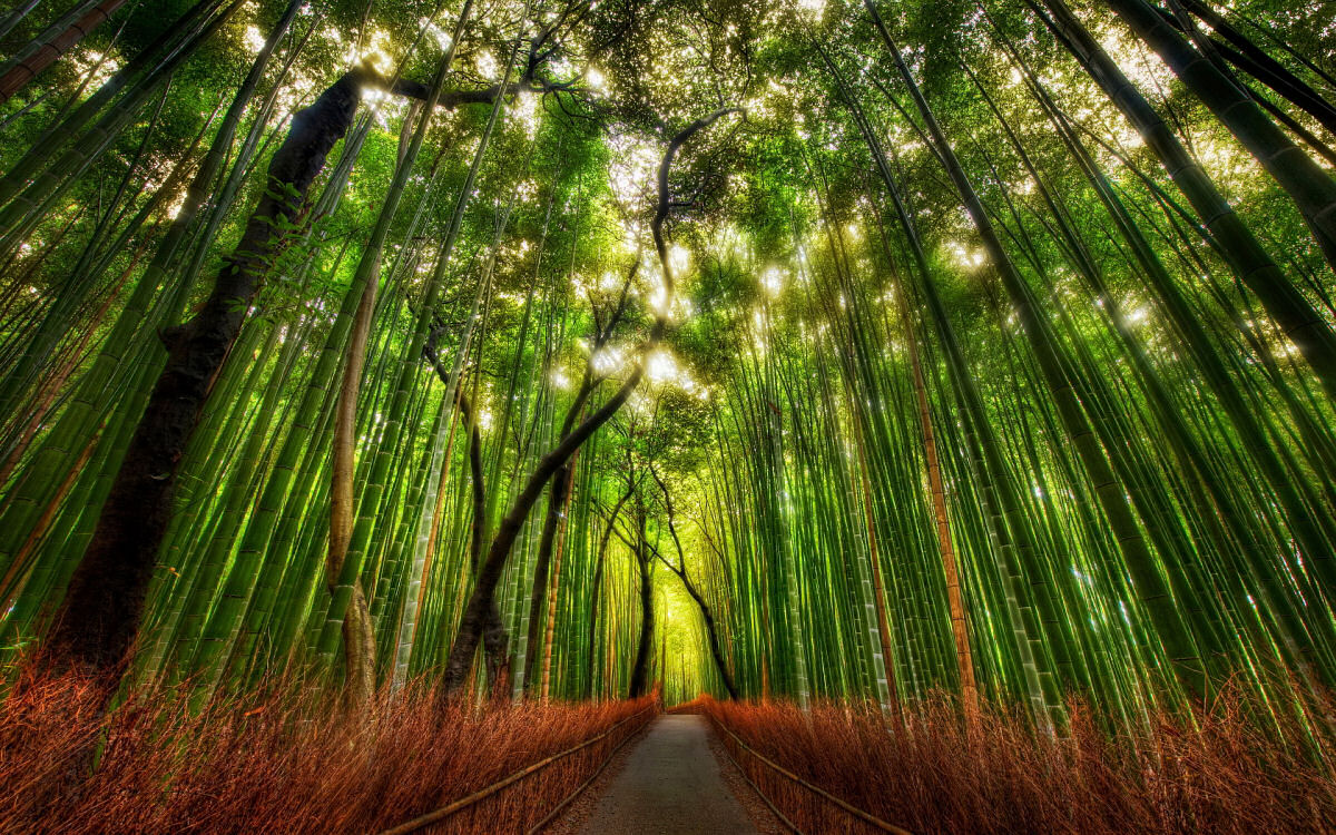 Conhece o misterioso fenômeno da florescência do bambu? 01
