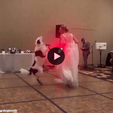 Essa noiva não podia ter um par melhor para dançar na festa