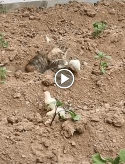 Esse gatinho teve a prova de que tamanho não é documento