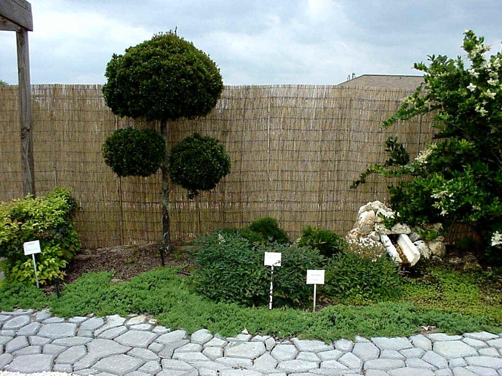 Fotos de topiarios de arbustos pinos etc