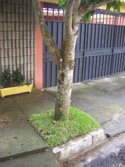 rboles para plantar en aceras