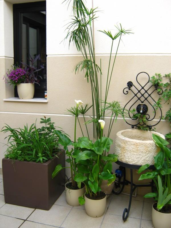 Decorar mi patio con plantas